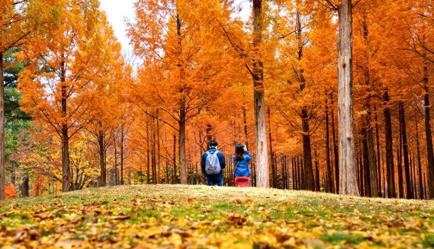 Korean Couple walking in Nami Park in Nami Island, Seoul_South Korea